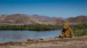El oso Coco y el horizonte por G I Mexicano